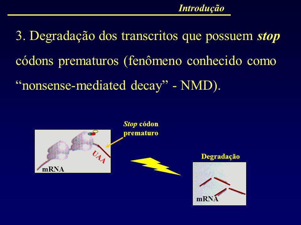Introdução 3. Degradação dos transcritos que possuem stop códons prematuros (fenômeno conhecido como nonsense-mediated decay - NMD).