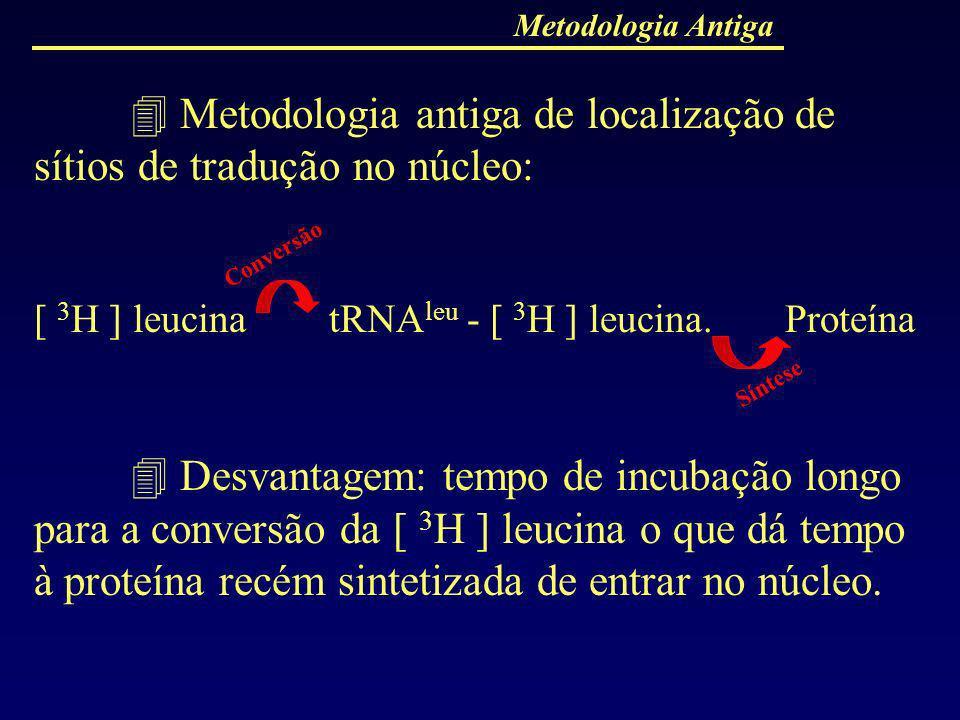  Metodologia antiga de localização de sítios de tradução no núcleo: