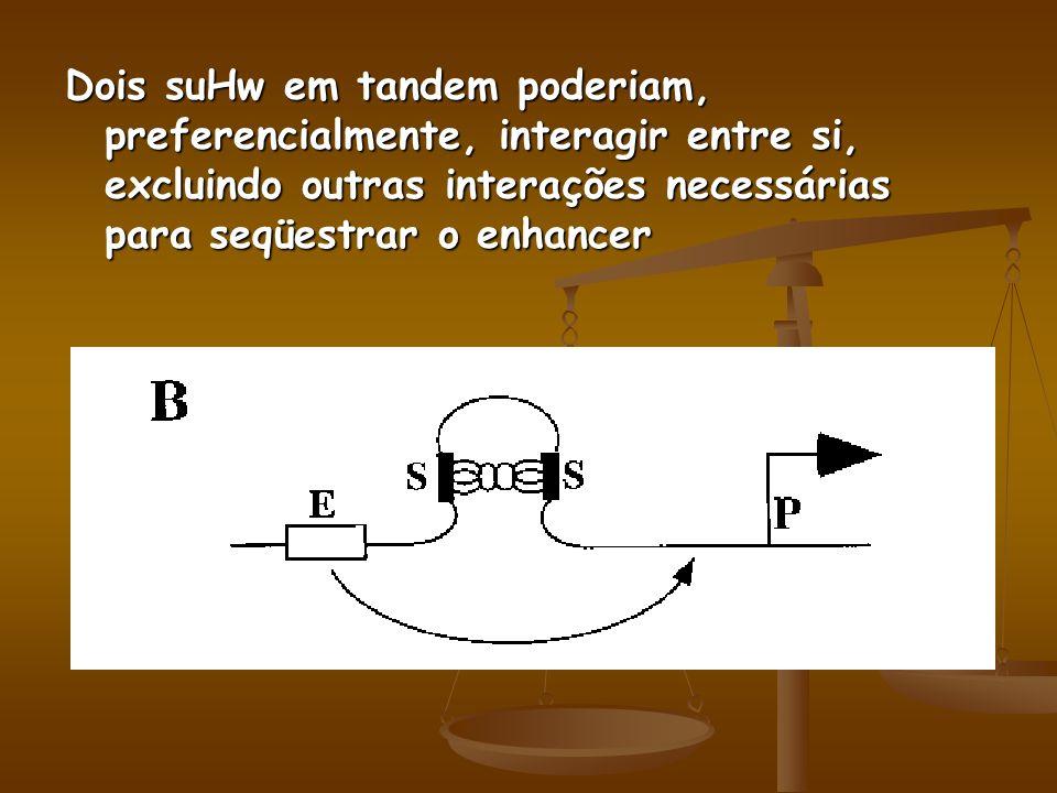Dois suHw em tandem poderiam, preferencialmente, interagir entre si, excluindo outras interações necessárias para seqüestrar o enhancer