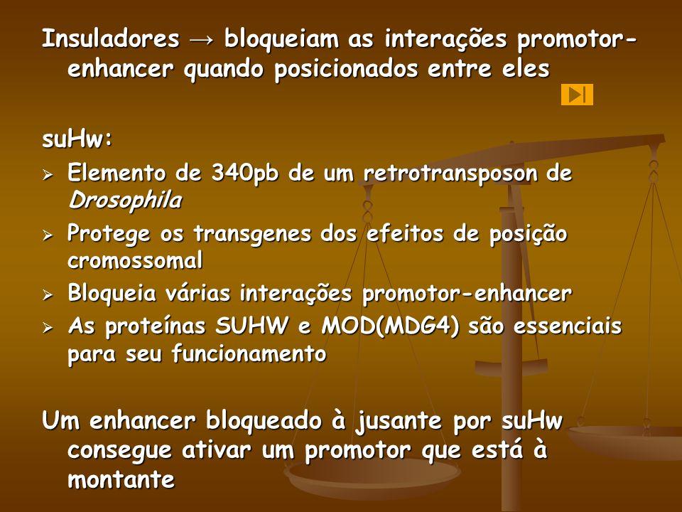 Insuladores → bloqueiam as interações promotor-enhancer quando posicionados entre eles