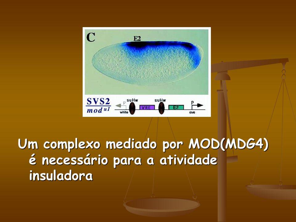 Um complexo mediado por MOD(MDG4) é necessário para a atividade insuladora