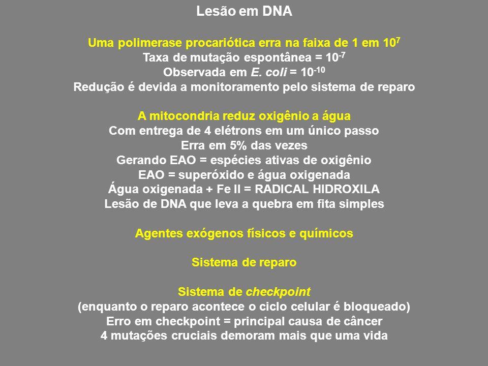 Lesão em DNA Uma polimerase procariótica erra na faixa de 1 em 107