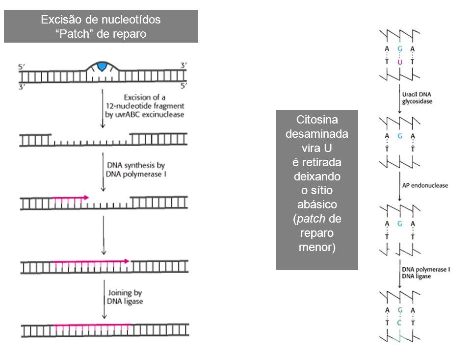 Excisão de nucleotídos Patch de reparo