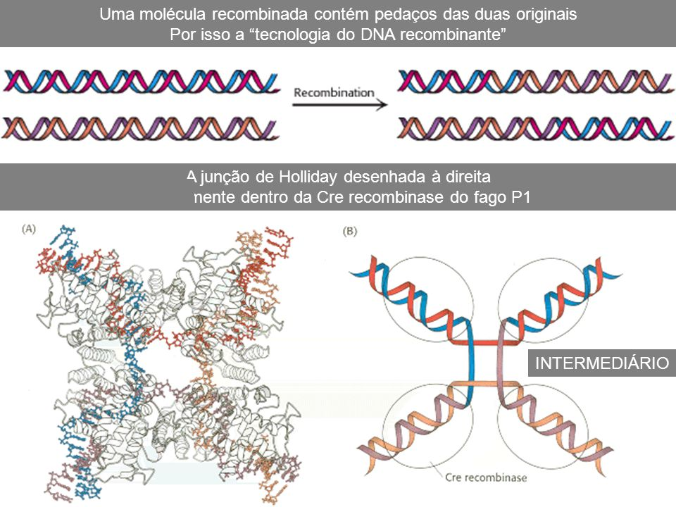Uma molécula recombinada contém pedaços das duas originais