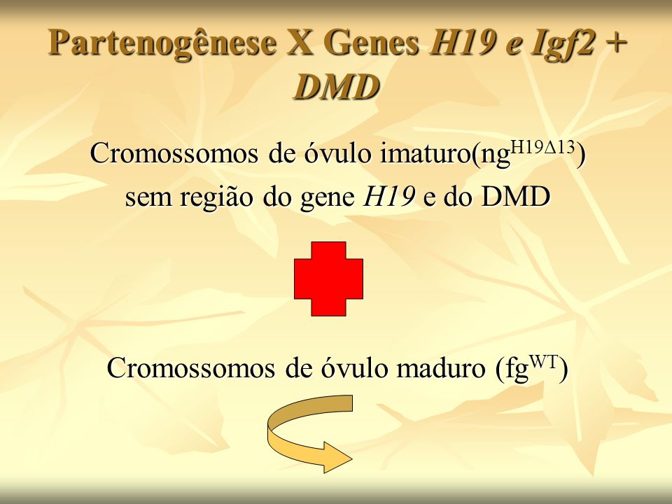 Partenogênese X Genes H19 e Igf2 + DMD