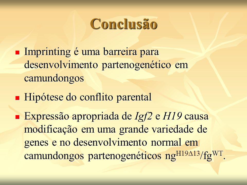 Conclusão Imprinting é uma barreira para desenvolvimento partenogenético em camundongos. Hipótese do conflito parental.