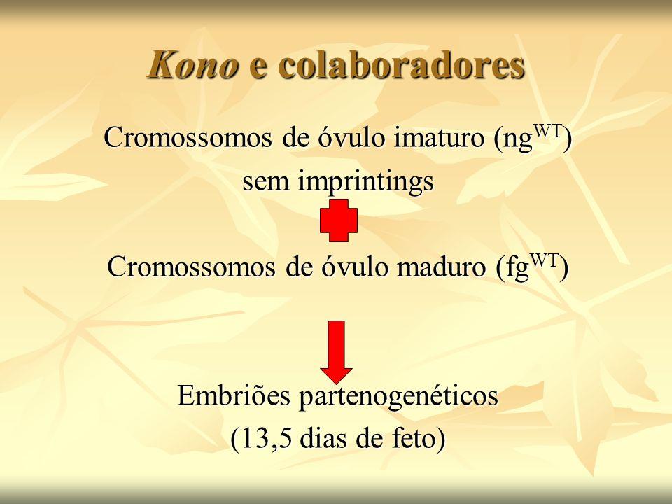 Kono e colaboradores Cromossomos de óvulo imaturo (ngWT)