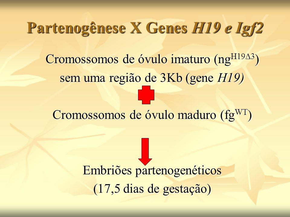 Partenogênese X Genes H19 e Igf2