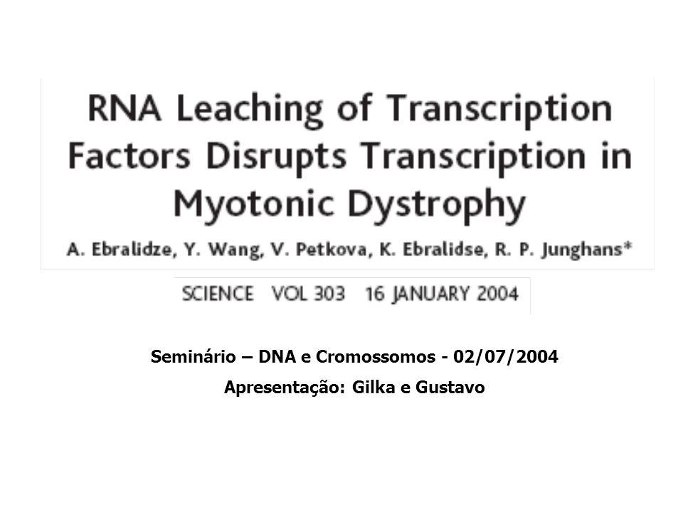 Seminário – DNA e Cromossomos - 02/07/2004