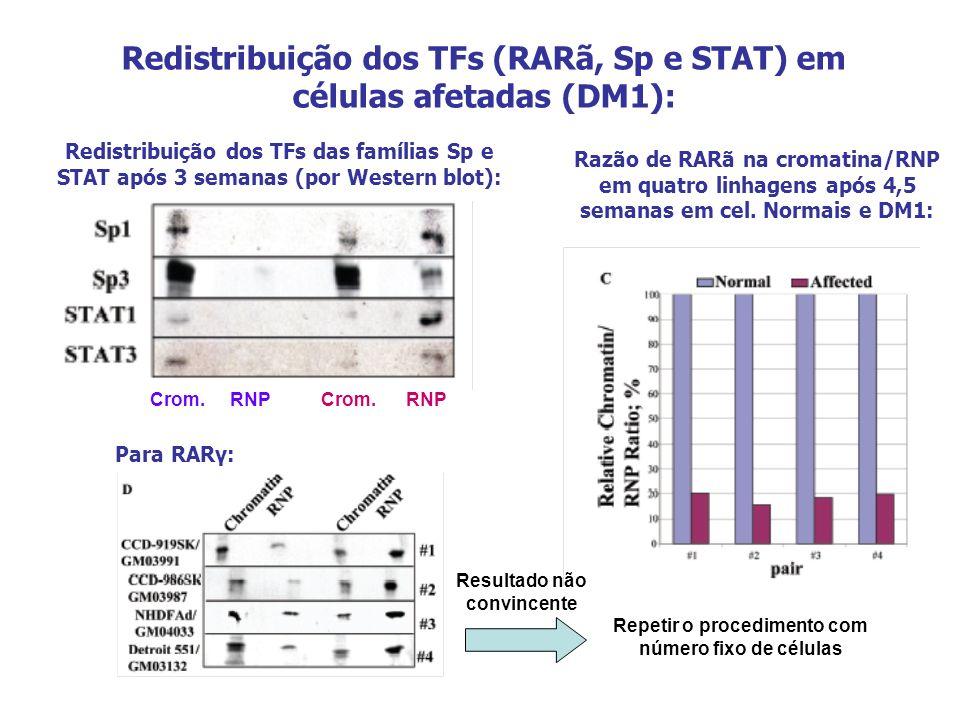 Redistribuição dos TFs (RARã, Sp e STAT) em células afetadas (DM1):