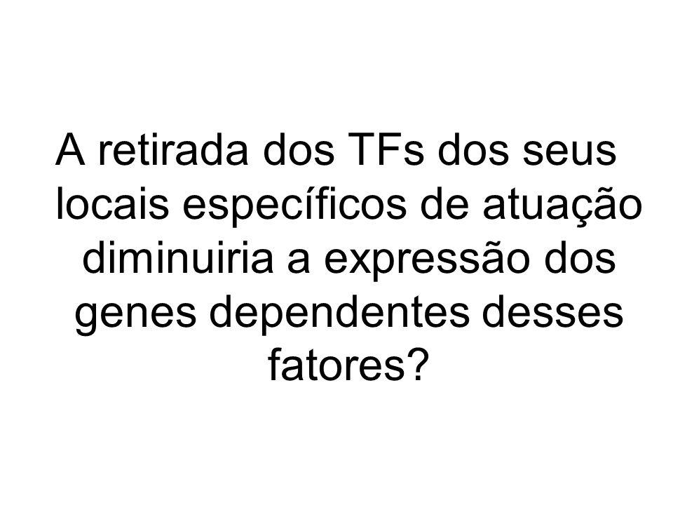 A retirada dos TFs dos seus locais específicos de atuação diminuiria a expressão dos genes dependentes desses fatores