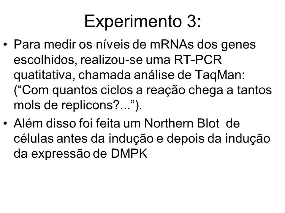 Experimento 3: