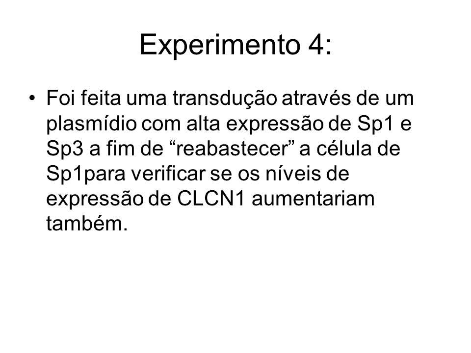 Experimento 4: