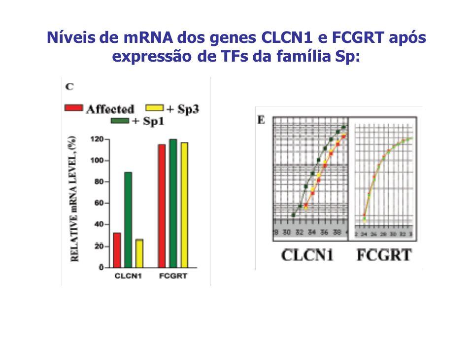 Níveis de mRNA dos genes CLCN1 e FCGRT após expressão de TFs da família Sp: