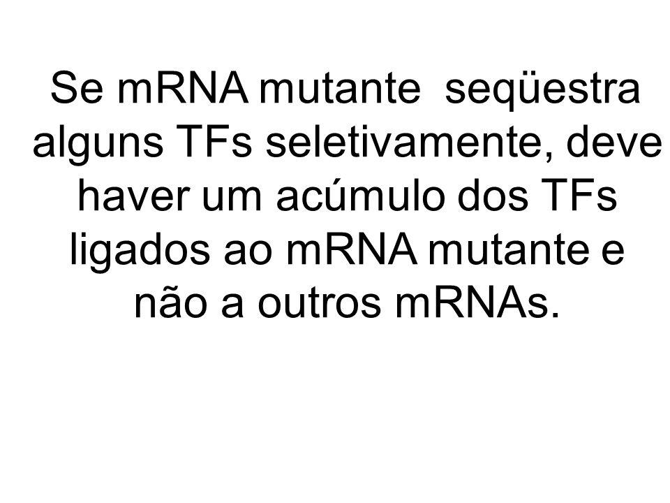 Se mRNA mutante seqüestra alguns TFs seletivamente, deve haver um acúmulo dos TFs ligados ao mRNA mutante e não a outros mRNAs.
