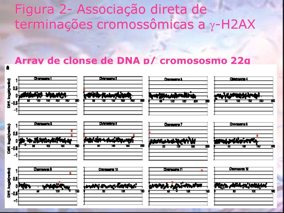 Figura 2- Associação direta de terminações cromossômicas a -H2AX Array de clonse de DNA p/ cromososmo 22q