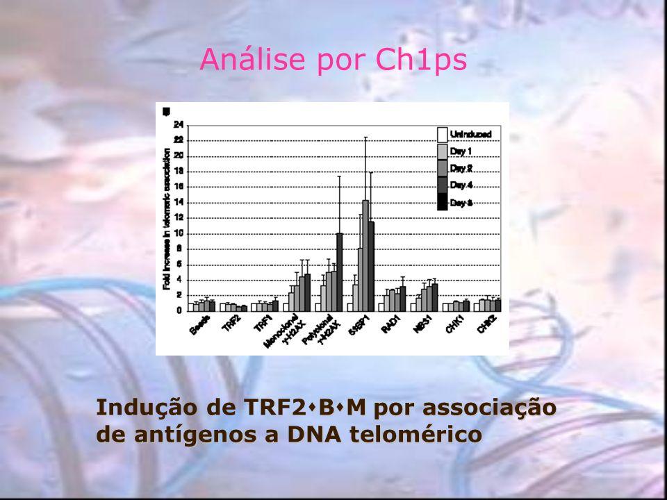 Análise por Ch1ps Indução de TRF2BM por associação de antígenos a DNA telomérico