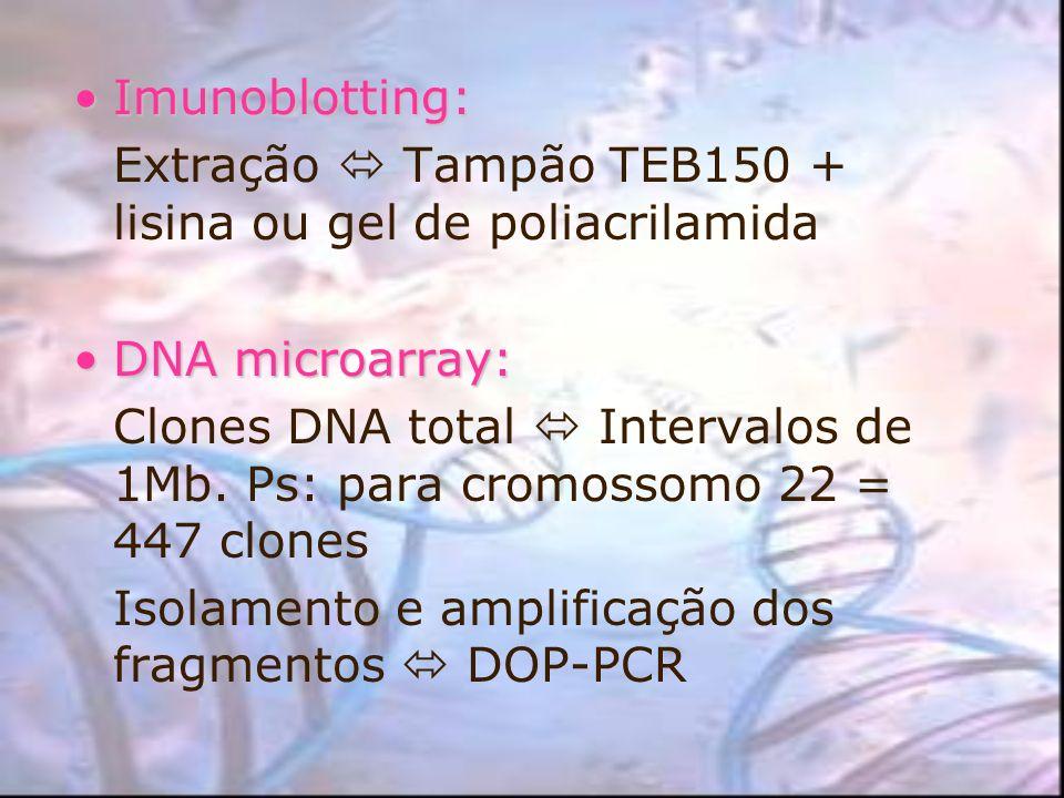 Imunoblotting:Extração  Tampão TEB150 + lisina ou gel de poliacrilamida. DNA microarray: