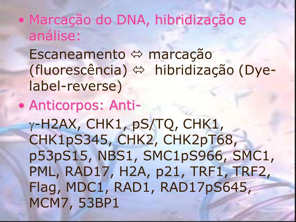 Marcação do DNA, hibridização e análise: