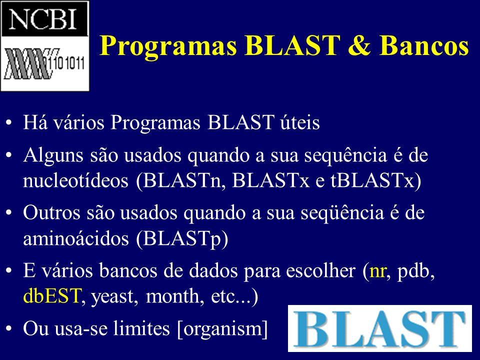 Programas BLAST & Bancos