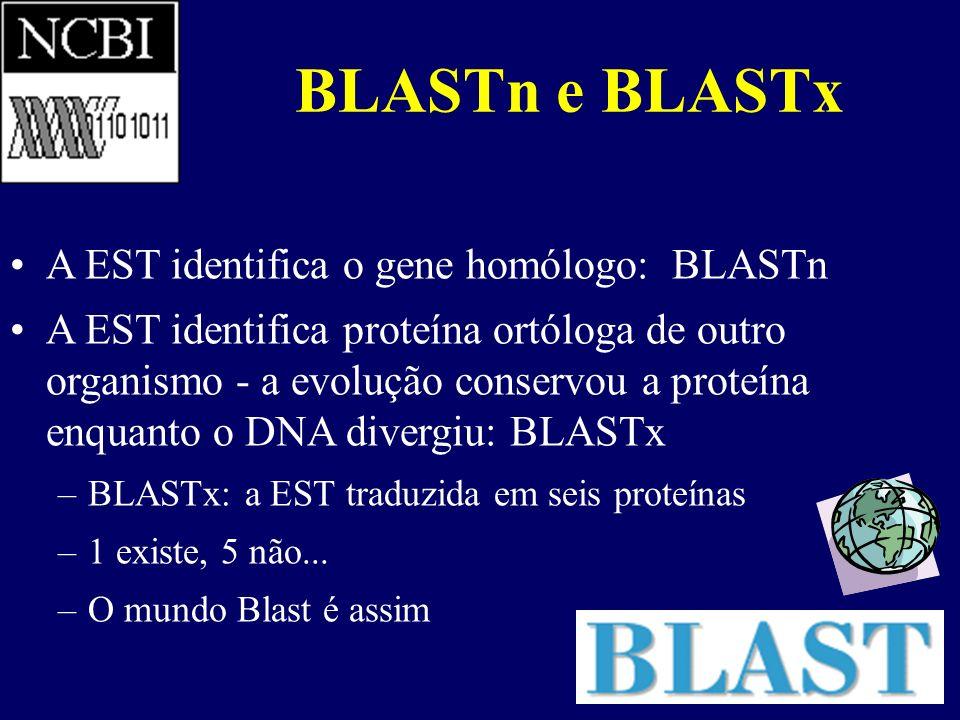 BLASTn e BLASTx A EST identifica o gene homólogo: BLASTn