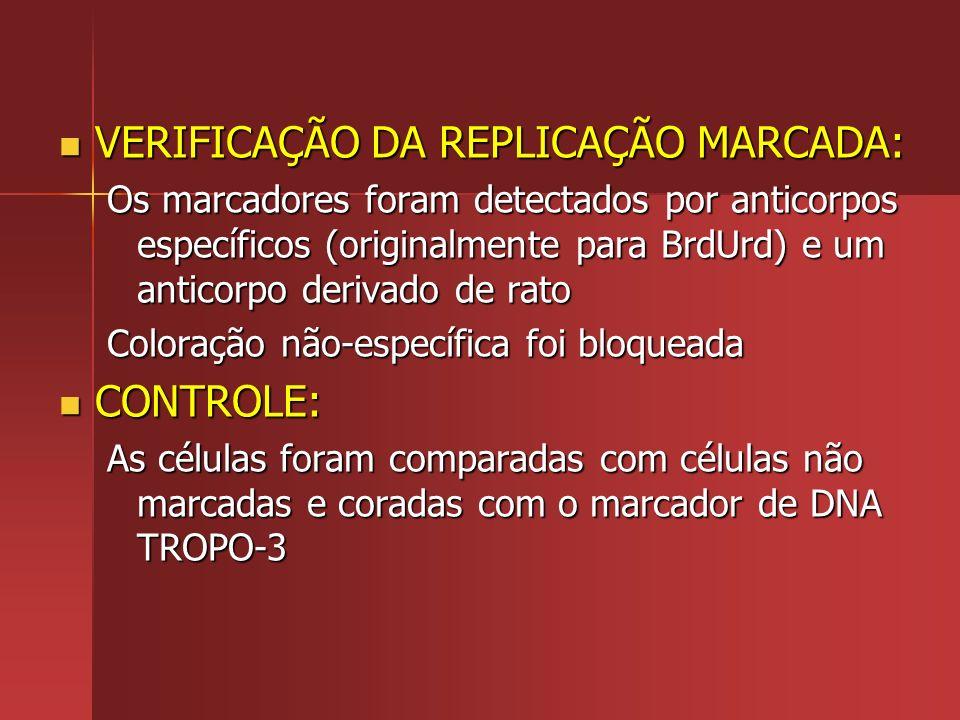 VERIFICAÇÃO DA REPLICAÇÃO MARCADA: