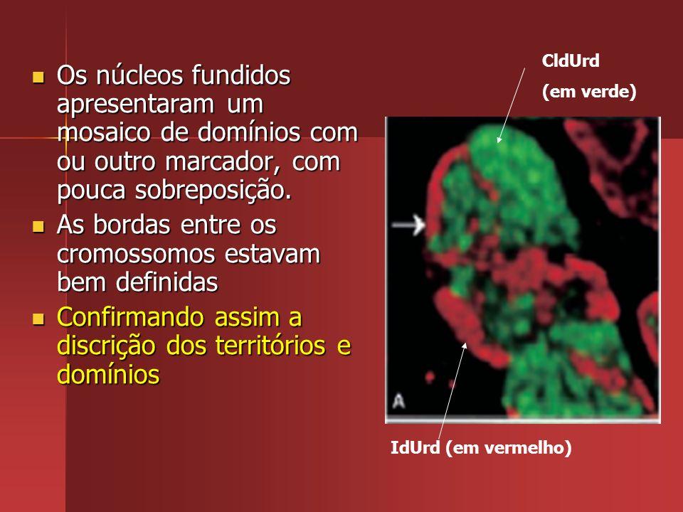 As bordas entre os cromossomos estavam bem definidas
