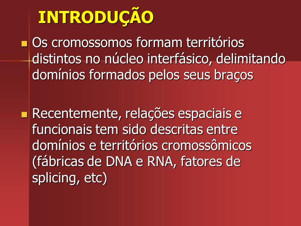 INTRODUÇÃO Os cromossomos formam territórios distintos no núcleo interfásico, delimitando domínios formados pelos seus braços.