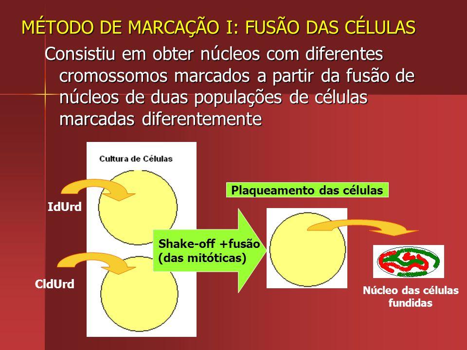 Plaqueamento das células Núcleo das células fundidas