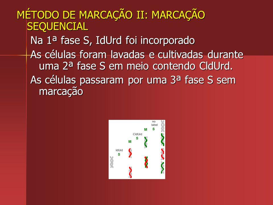 MÉTODO DE MARCAÇÃO II: MARCAÇÃO SEQUENCIAL