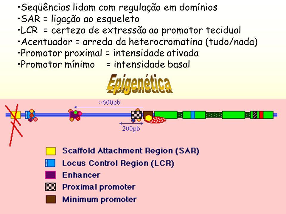 Epigenética Seqüências lidam com regulação em domínios