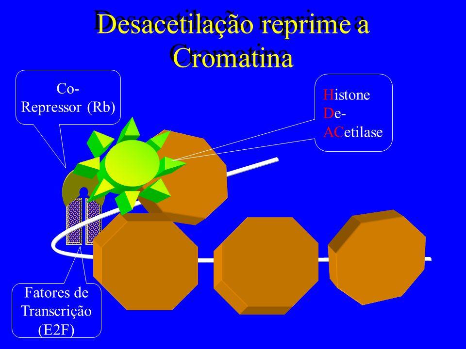 Desacetilação reprime a Cromatina