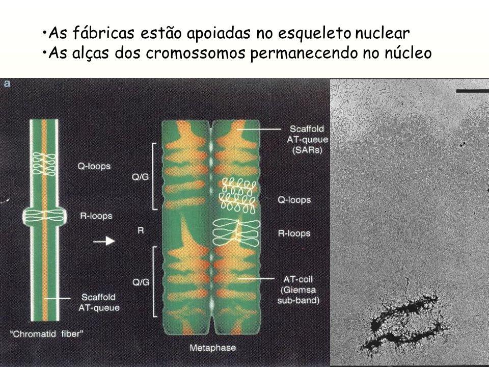 As fábricas estão apoiadas no esqueleto nuclear