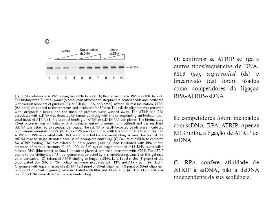 O: confirmar se ATRIP se liga a outros tipos/seqüências de DNA