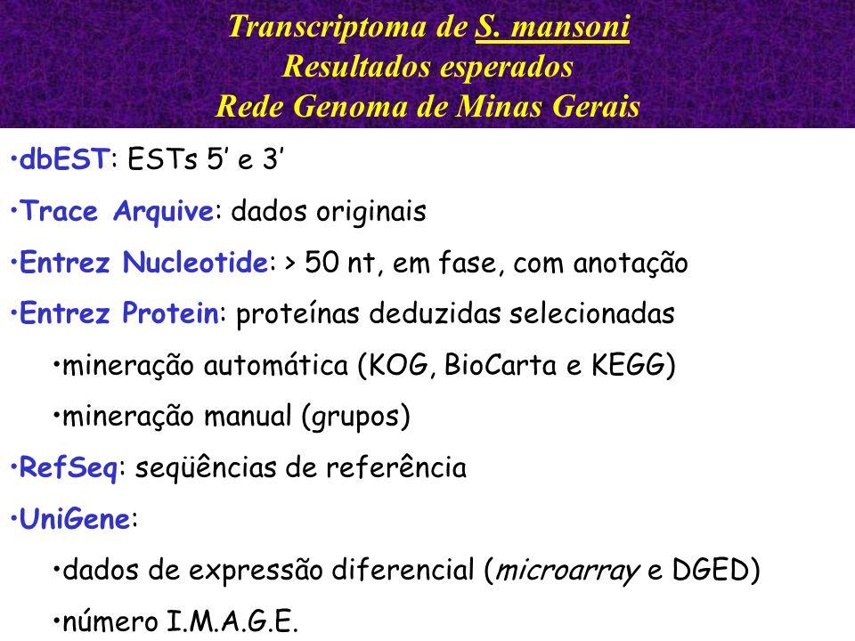 Transcriptoma de S. mansoni Rede Genoma de Minas Gerais