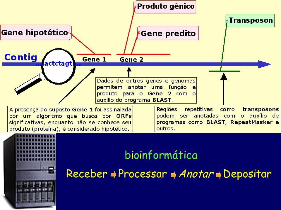 bioinformática Receber Processar Anotar Depositar