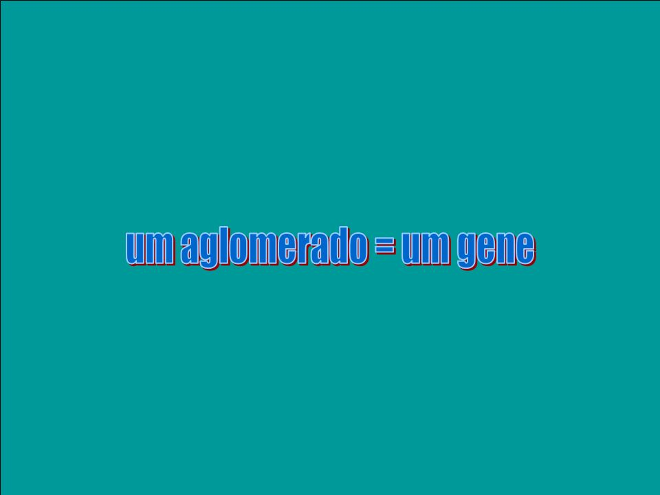 um aglomerado = um gene