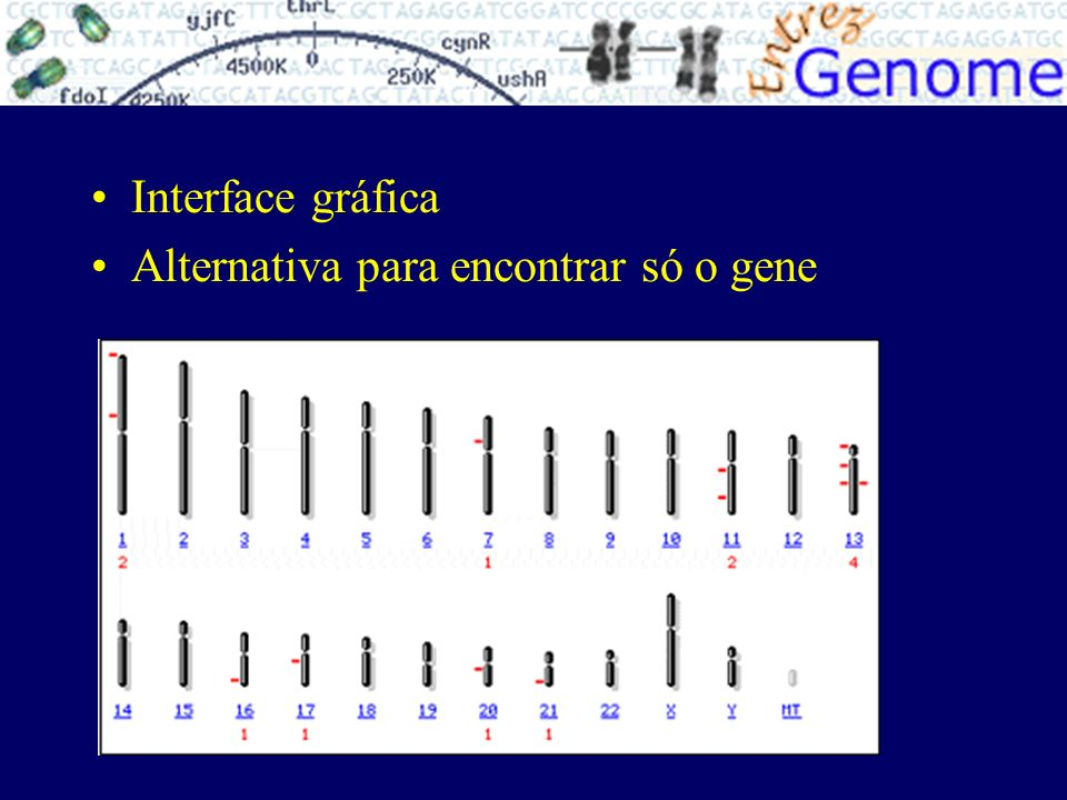 Interface gráfica Alternativa para encontrar só o gene