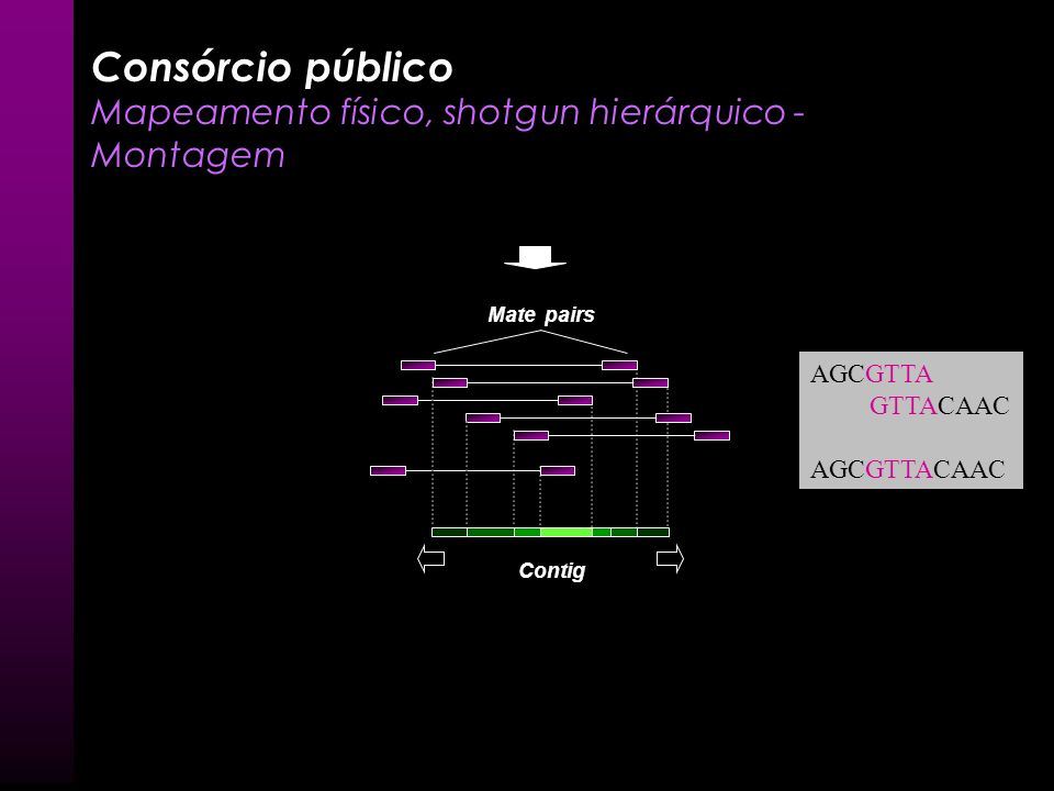 Consórcio público Mapeamento físico, shotgun hierárquico - Montagem