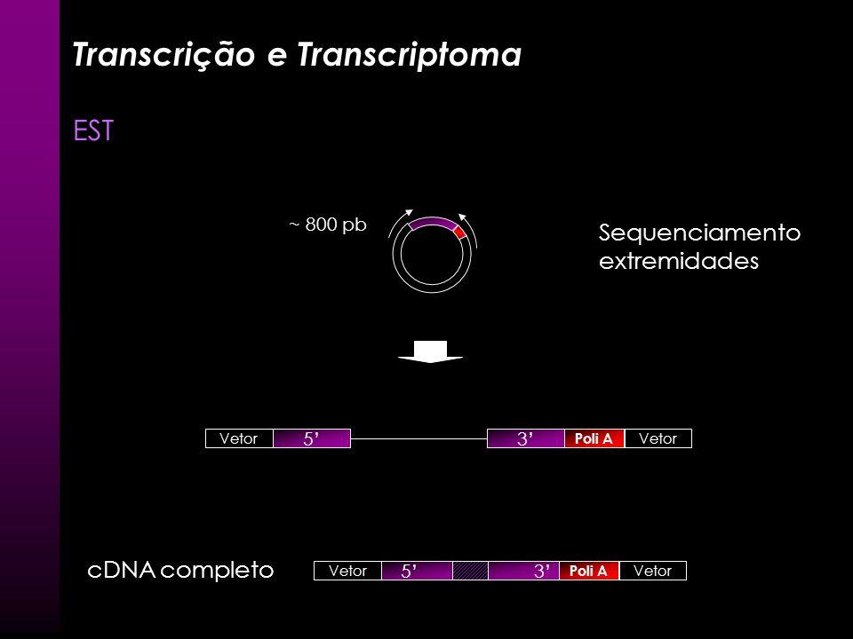 Transcrição e Transcriptoma