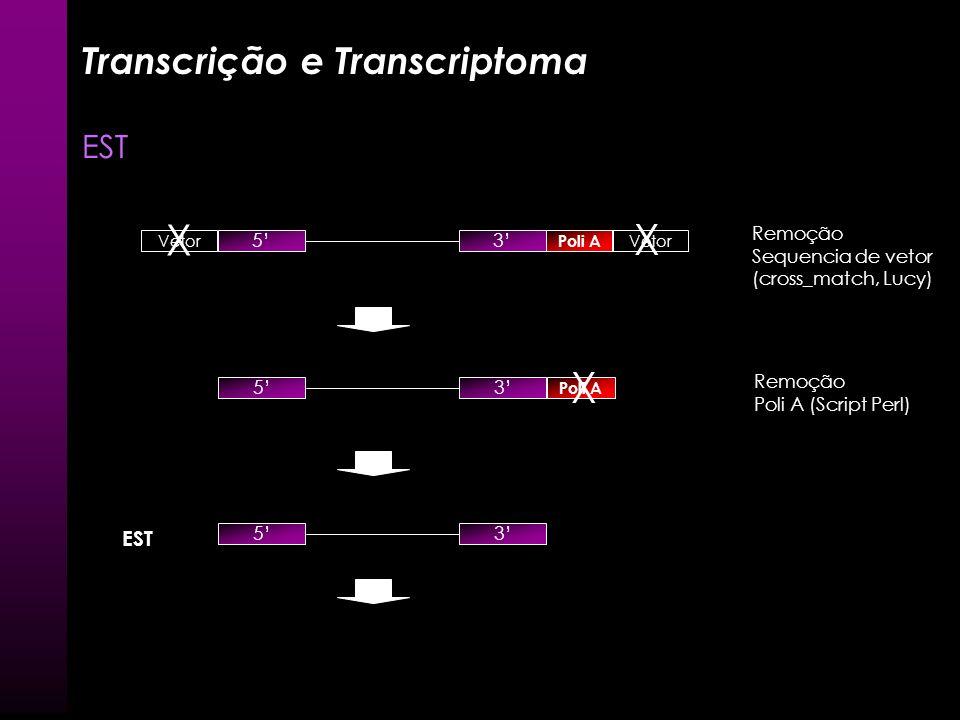 X X X Transcrição e Transcriptoma EST EST Remoção Sequencia de vetor