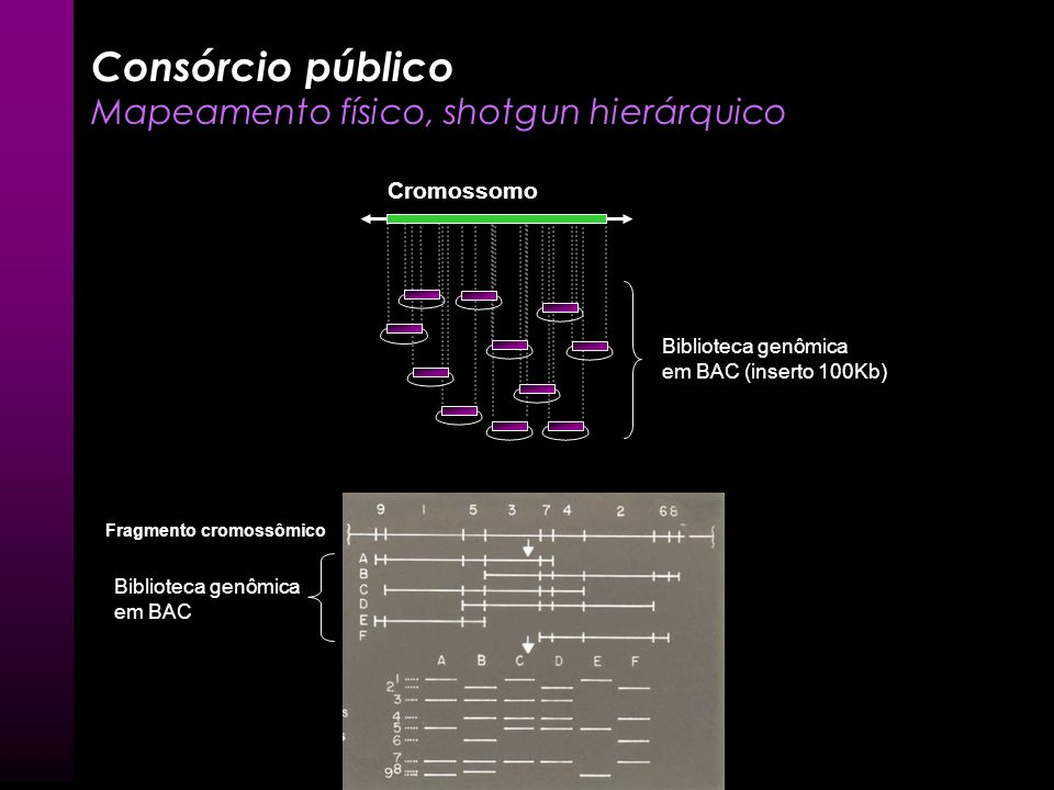 Consórcio público Mapeamento físico, shotgun hierárquico Cromossomo