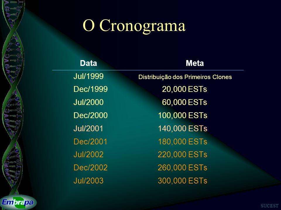O Cronograma Data Meta Jul/1999 Distribuição dos Primeiros Clones