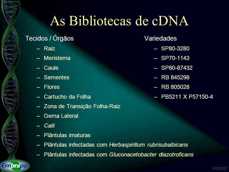 As Bibliotecas de cDNA Tecidos / Órgãos Variedades Raiz Meristema