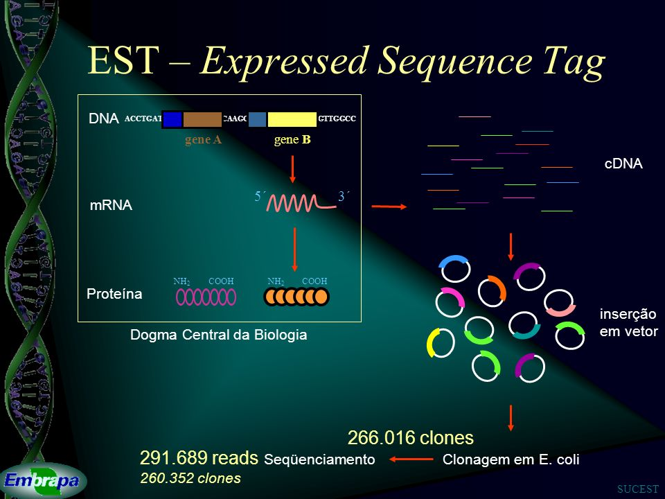 EST – Expressed Sequence Tag