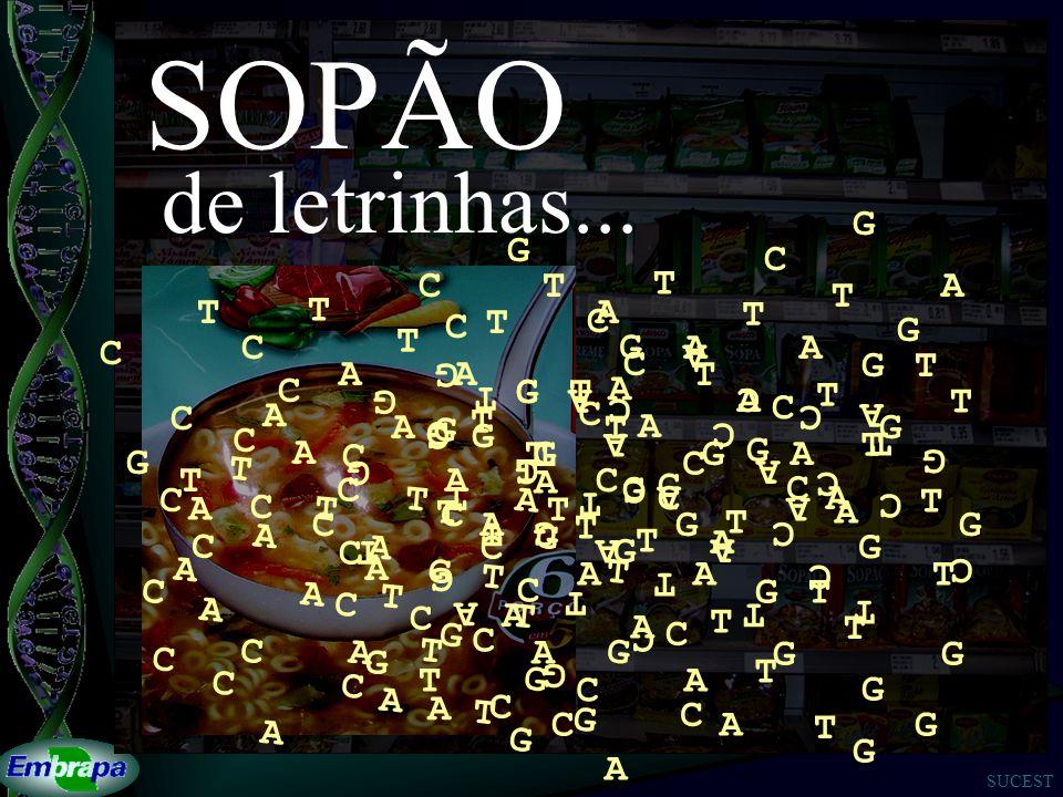 SOPÃO de letrinhas... A T G C