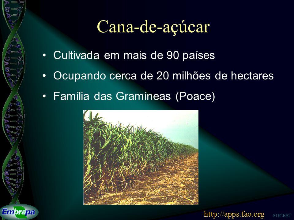 Cana-de-açúcar Cultivada em mais de 90 países