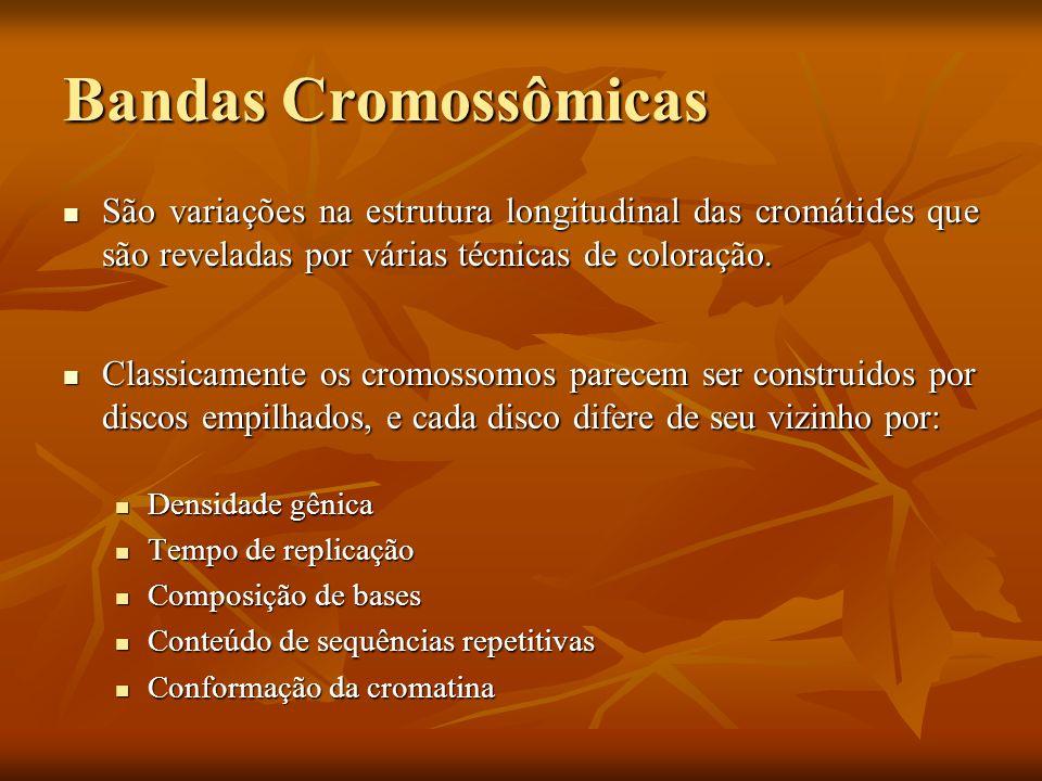 Bandas CromossômicasSão variações na estrutura longitudinal das cromátides que são reveladas por várias técnicas de coloração.