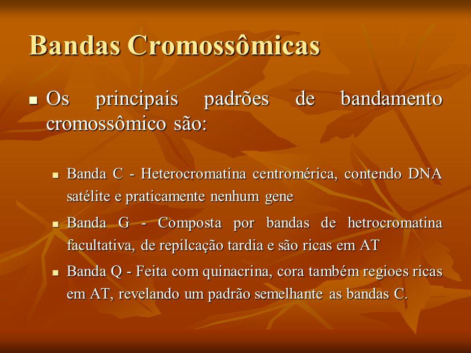 Bandas Cromossômicas Os principais padrões de bandamento cromossômico são: