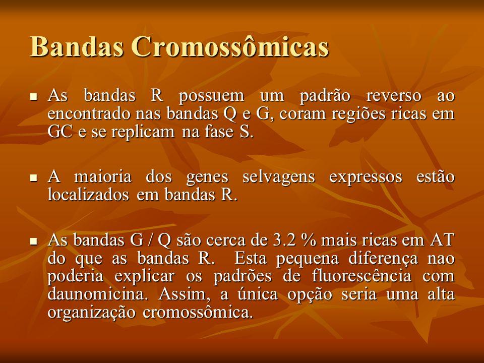 Bandas CromossômicasAs bandas R possuem um padrão reverso ao encontrado nas bandas Q e G, coram regiões ricas em GC e se replicam na fase S.